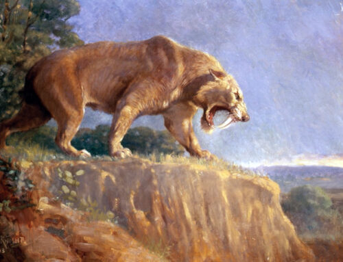 Did Snarling Saber-tooth Cats Have Kind Hearts?