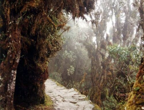 Footsteps Along Inca Roads