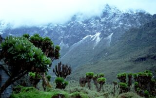 Rwenzori Mountains National Park,
