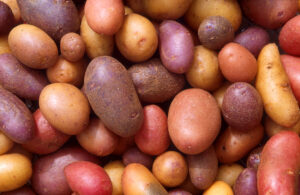 potato variety