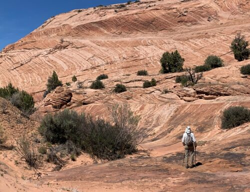 Colors and Cross-beds in Red Rock Country