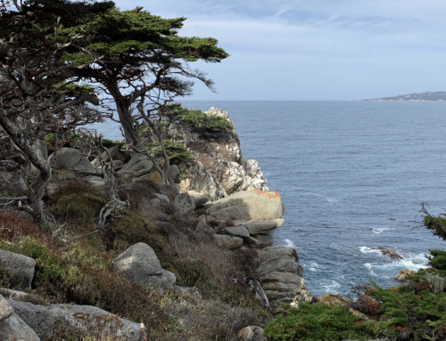 The Kelp Highway