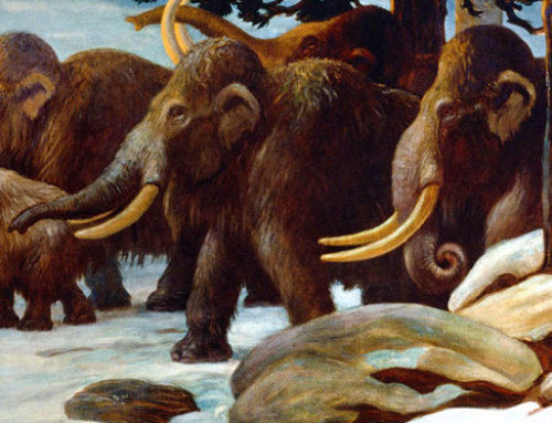 Where Mammoths and Mastodons Once Roamed